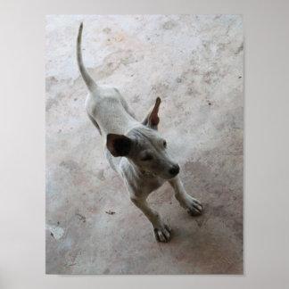 Perro de perrito tailandés de Luk Maa… Soi Póster