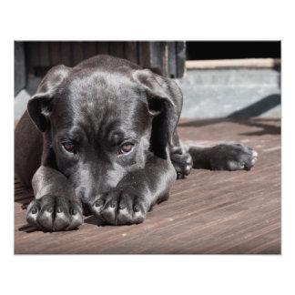Perro de perrito tímido-lindo fotos