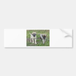 Perro de perritos de Anatolia del pastor Pegatina Para Coche