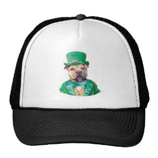 Perro de Pitbull del irlandés Gorro