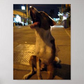 Perro del AMI… Soi del pis, Tailandia Poster