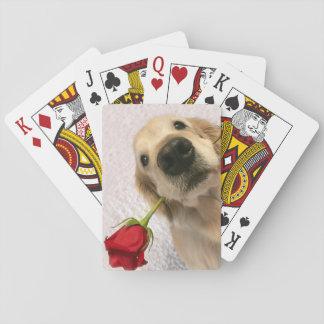 Perro del golden retriever con el rosa rojo baraja de cartas
