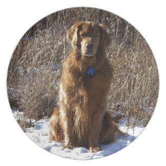 Perro del golden retriever plato