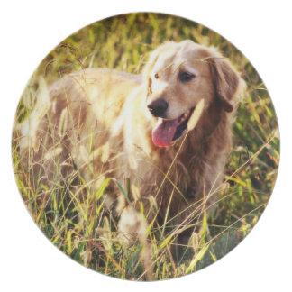 Perro del golden retriever platos de comidas