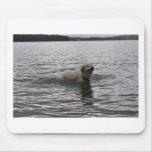 Perro del laboratorio en agua alfombrillas de raton
