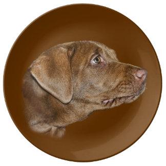 Perro del labrador retriever platos de cerámica