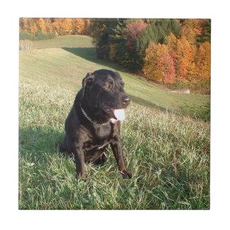 Perro del sílex azulejo cuadrado pequeño
