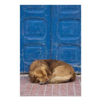 Perro el dormir, Essaouira, Marruecos Fotografias