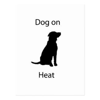 Perro en calor tarjeta postal
