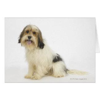 Perro en el blanco 104 tarjeta