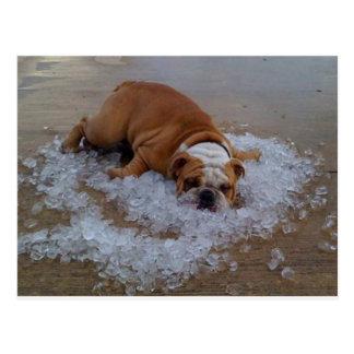 perro en el hielo, presa soy caliente postal