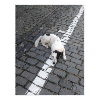 Perro en la línea postal