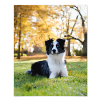 Perro en la naturaleza folleto 11,4 x 14,2 cm