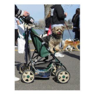 Perro en postal del carro de bebé