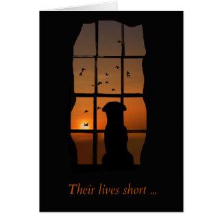 Perro en tarjeta del monumento de la ventana