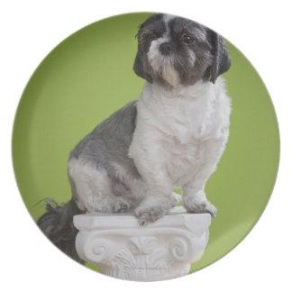 Perro en una columna platos