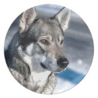 Perro esquimal en placa de la nieve plato de comida