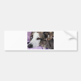 Perro, gato, amistad etiqueta de parachoque