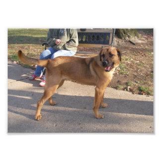 Perro grande de Brown que hace una pausa un banco Impresion Fotografica
