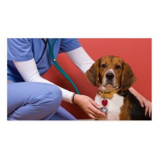 Perro lindo del beagle que consigue un chequeo vet plantillas de tarjetas de visita