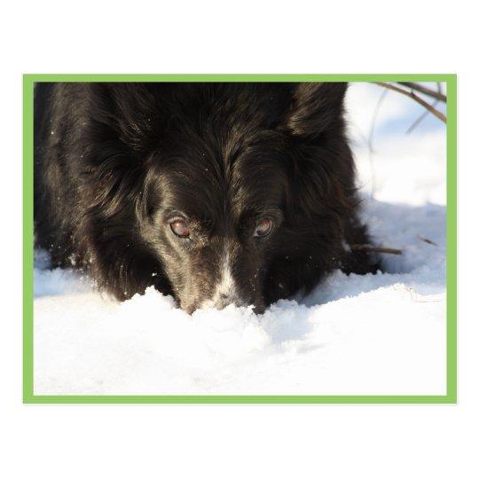 Perro lindo del collie en la nieve postal