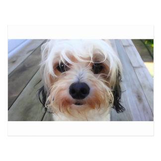 Perro lindo en la postal del banco