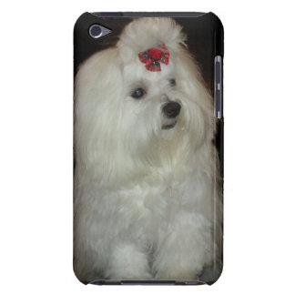 Perro maltés adorable funda para iPod