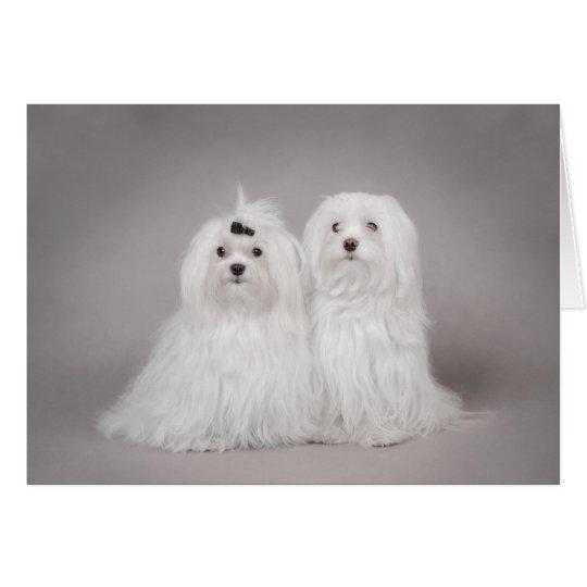 Perro maltés dos tarjeta de felicitación