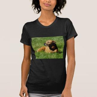 perro, mezcla del pitbull/del boxeador camiseta