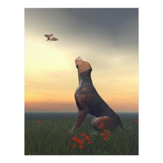 Perro negro del moreno que mira un vuelo del flyer
