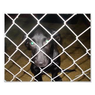 Perro negro triste detrás de la cerca en libra de  foto