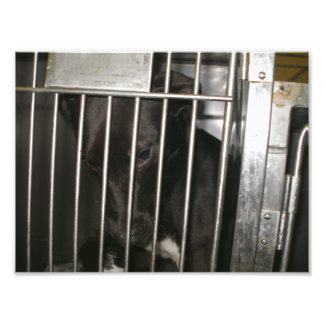 Perro negro triste que se inclina contra puerta de fotografias