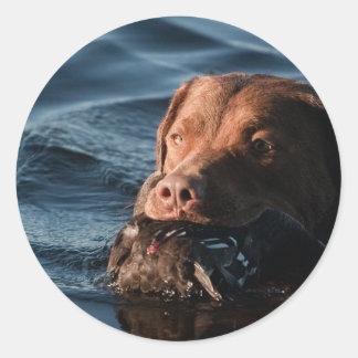 Perro perdiguero de bahía de Chesapeake Pegatina Redonda