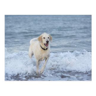 Perro que corre en agua en la playa postal
