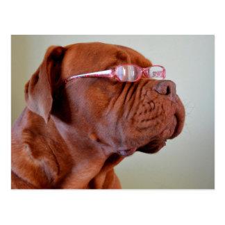 Perro que lleva las lentes rosadas postal