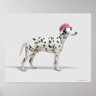 Perro que lleva un gorra póster