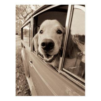 Perro que mira a escondidas hacia fuera una postal
