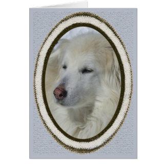 Perro *Sandy - disculpa/triste Tarjeta De Felicitación