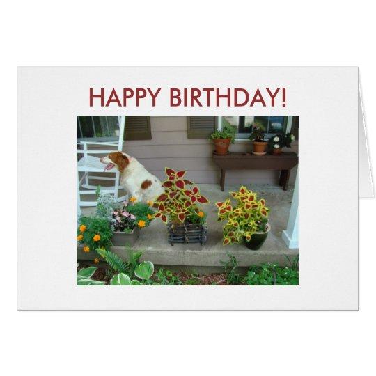 ¡Perro y flores en el pórtico, FELIZ CUMPLEAÑOS! Tarjeta De Felicitación