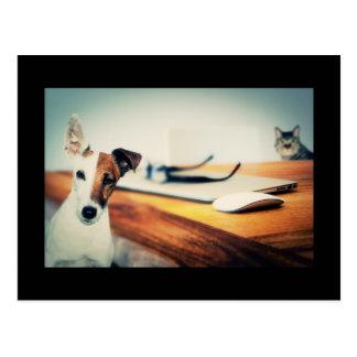 Perro y gato lindos en postal de la oficina
