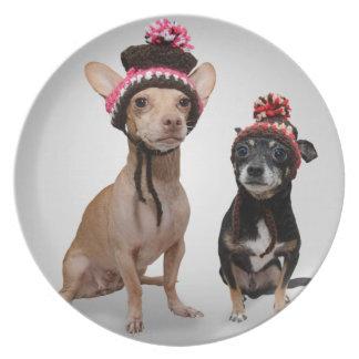 Perros de la chihuahua con la foto de los gorras platos