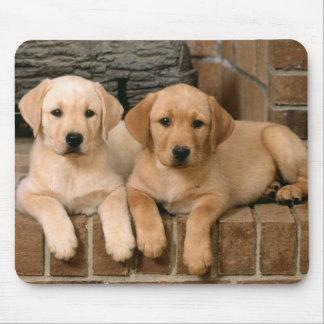 Perros de perrito amarillos del labrador retriever alfombrilla de ratón