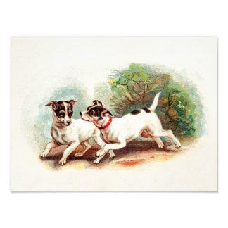 Perros del fox terrier de los 1800s del vintage -  fotografia