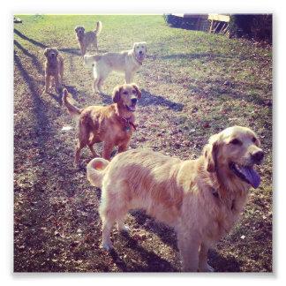 Perros del golden retriever del vintage alineados arte con fotos
