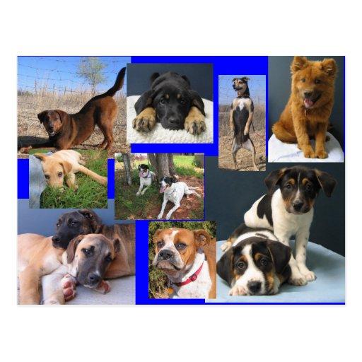 Perros del refugio para animales de OKC Postales