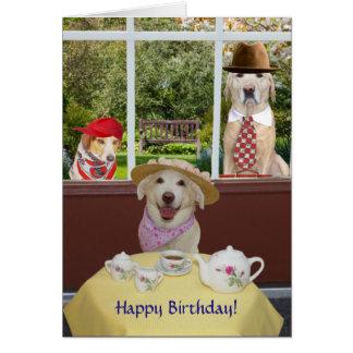 Perros divertidos/cumpleaños de la hembra de los tarjeta de felicitación