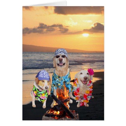 Perros divertidos en la playa en la puesta del sol felicitacion