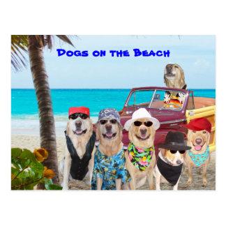 Perros en la playa postal