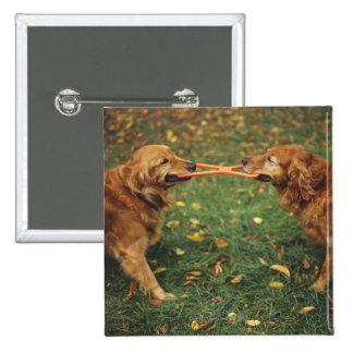 Perros perdigueros de oro que juegan esfuerzo chapa cuadrada