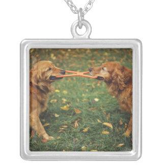 Perros perdigueros de oro que juegan esfuerzo colgante cuadrado